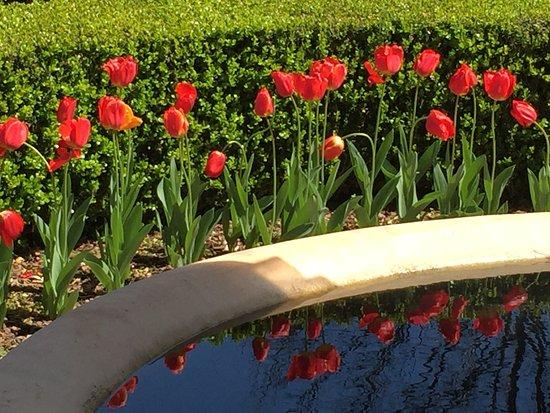 LaGrange, جورجيا: Tulip reflection
