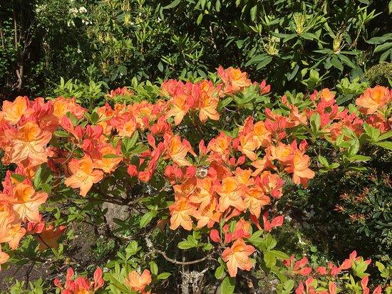 Greenbank, واشنطن: Meerkerk Rhododendron Gardens