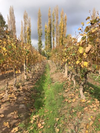 Finca Adalgisa Wine Hotel, Vineyard & Winery: photo0.jpg