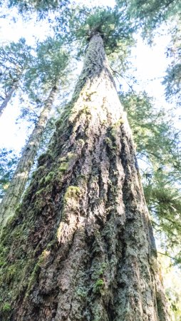 Port Alberni, Canada: Cathedral grove