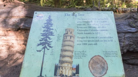 Port Alberni, Canadá: big tree, the boss