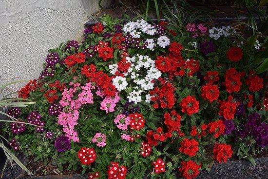 Gem Park-Ooty: flowers
