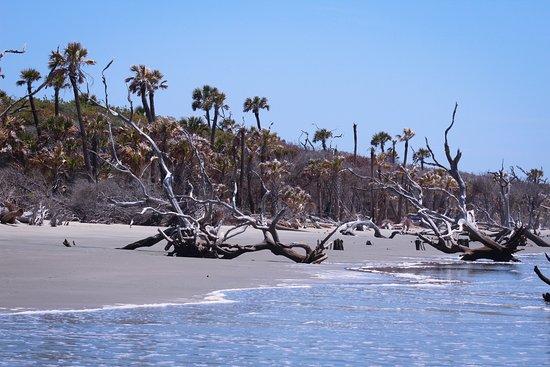 Coastal Expeditions Boneyard Beach