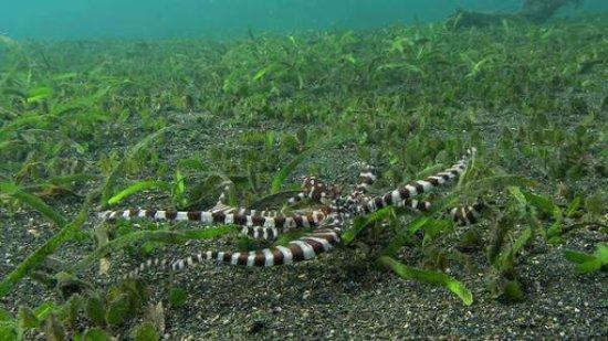 Деза-Секотонг-Барат, Индонезия: Wonderpuss