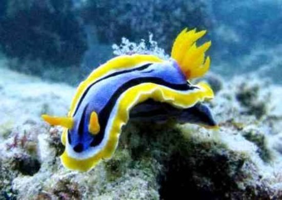 Pearl Beach Resort: Nudibranch
