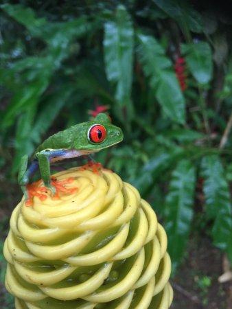 Frogs Heaven照片