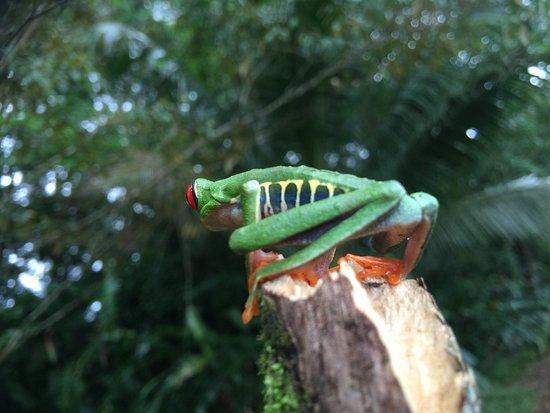 Frogs Heaven: photo1.jpg