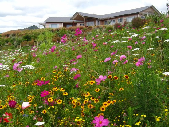Katikati, New Zealand: Wild flowers in the garden looking towards our B&B