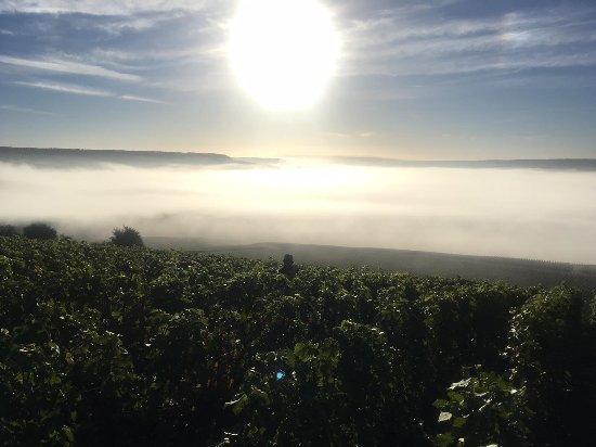 Verneuil, France: Vue depuis les vignes du domaine.