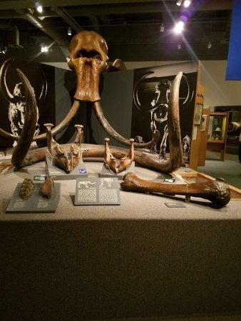University of Alaska Museum of the North Photo