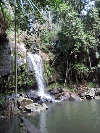 Tamborine Mountain, Australia: Pleasant walk and OK waterfall