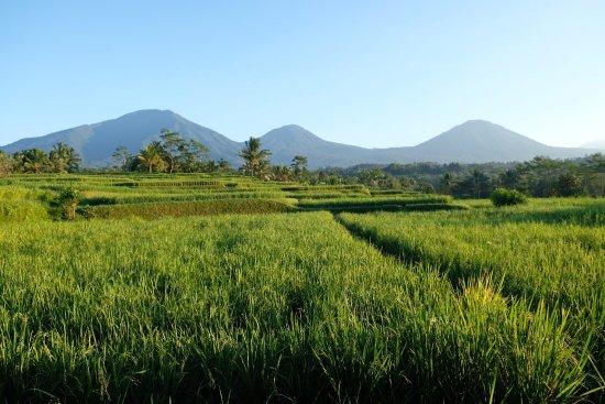 Penebel, Indonesia: photo5.jpg