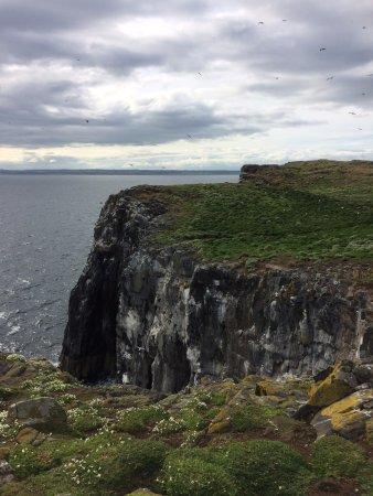 Анстратер, UK: View of nesting cliffs