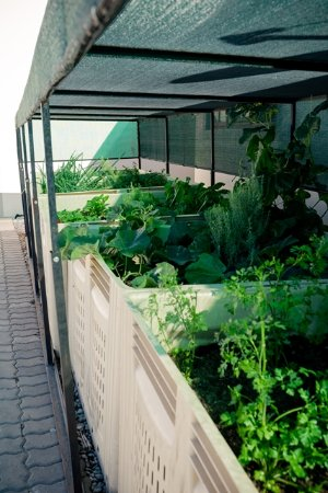 Addo, Güney Afrika: We use fresh herbs from our own herb garden