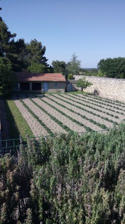 Saint-Remy-de-Provence, France: le jardin derrière le cloitre