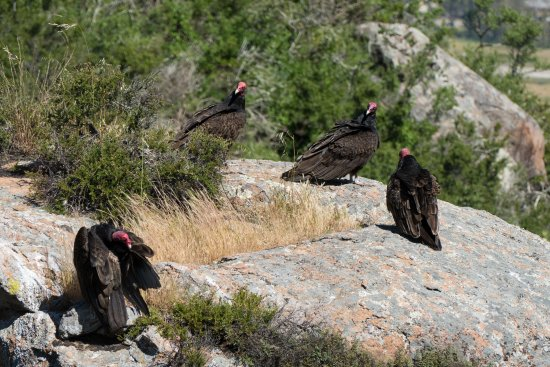 Bishop Peak guardians!