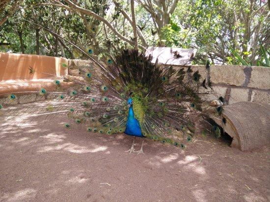 Arona, Ισπανία: Liberi per lo zoo
