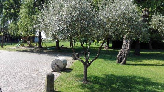 Salboro, Italia: IMG_20170518_103152_large.jpg