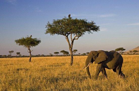 Región de Arusha, Tanzania: nice shot in Serengeti