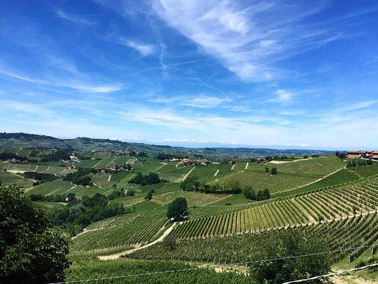Serralunga d'Alba, Italy: Vista dalla sala pranzo