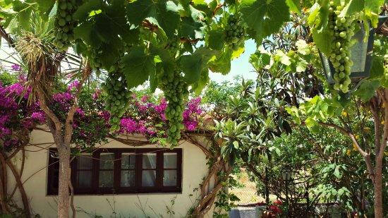 Uma Casa a Beira Sol: Jardim