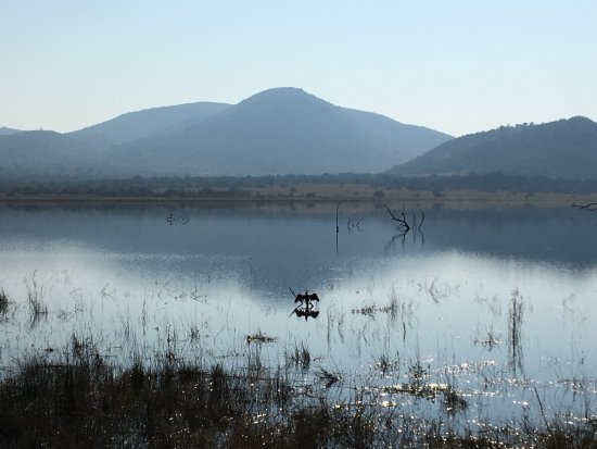 Pilanesberg Safaris and Tours: Scenes from walking to a hide to view birds