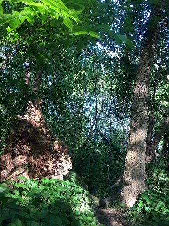 OPPD Arboretum: photo1.jpg