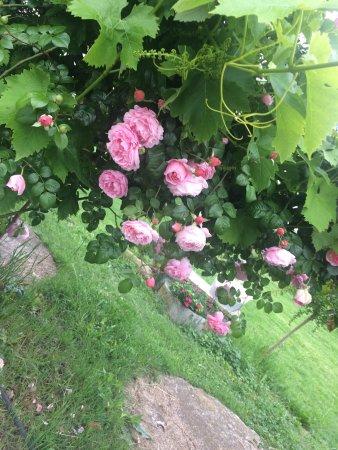 Scandiano, Italy: Gattonero Osteria con Giardino