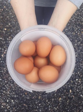 ‪‪Sparkford‬, UK: Selling fresh organic eggs from our chickens on-site‬