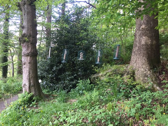 Capel Curig, UK: Bird feeders in the gardens of the Ugly House