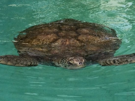 Sandys Parish, Bermuda: Say hi to Mr. Turtle....an extra stop on the tour..thanks Mitchel.
