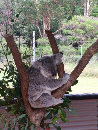 Childers, Australie : photo2.jpg
