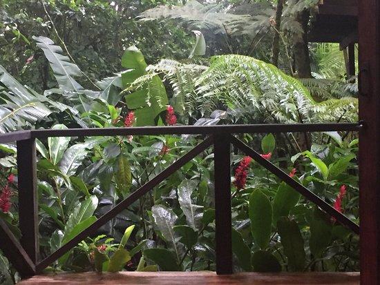 هوتل ريو سيليست هايد واي: Balcony