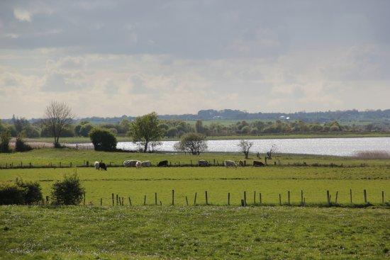 Creevagh, Ireland: Le Shannon