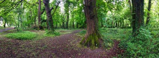 Templemore, Ireland: photo3.jpg