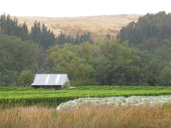 Blenheim, New Zealand: Vineyard