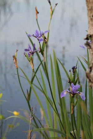"""Lily Pond,"" Hermit Island Campground"