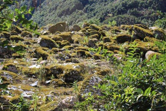 Franz Josef, Nova Zelândia: Moss rocks