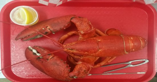 Bucksport, ME: We have the largest lobsters available in Maine!