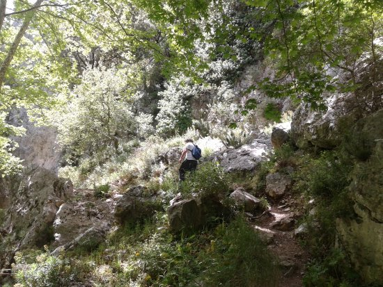 Φαράγγι του Αγίου Αντωνίου (Φαράγγι Πατσού) - Picture of ...