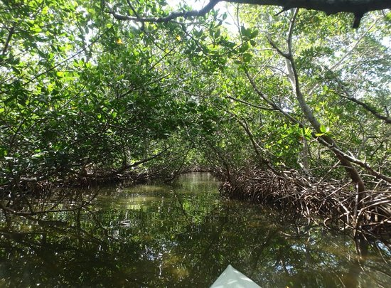 Hooked On SUP: Mangrove Tunnel