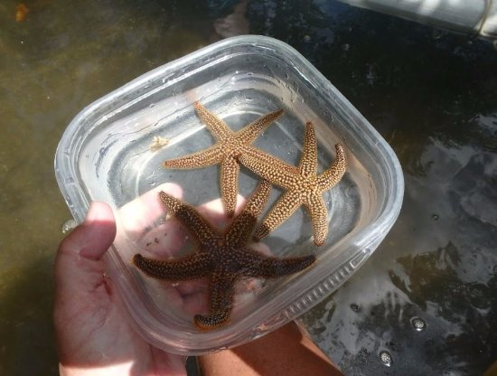 Hooked On SUP: Starfish