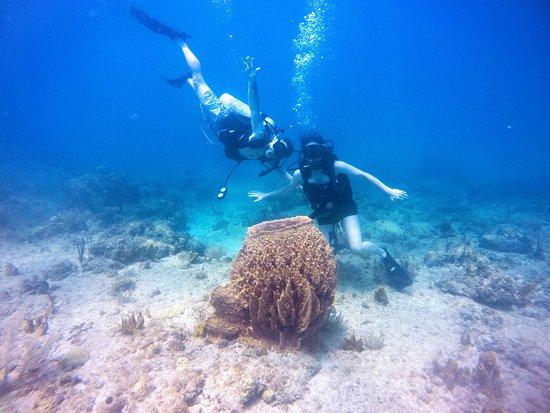 English Harbour, Αντίγκουα: Barrel Sponge!
