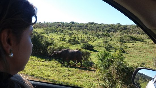 Addo Elephant National Park, Afrika Selatan: 20170521_104243_large.jpg