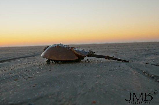 Isle of Palms, Güney Carolina: Dewees Island