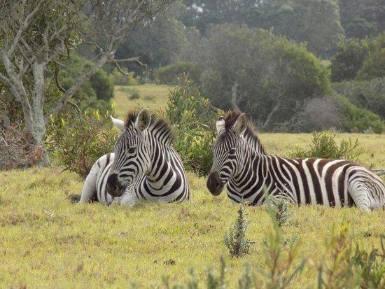 Port Elizabeth, Sudáfrica: IMG-20170415-WA0056_large.jpg