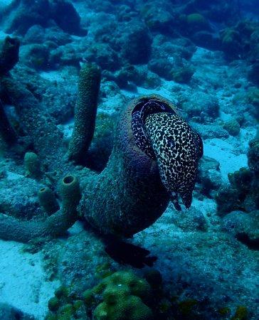 Kralendijk, Bonaire: Spotted Eel