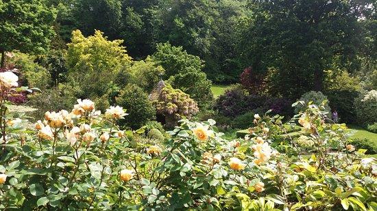 Mai tout est en fleurs - Bild von Jardins de Kerdalo ...