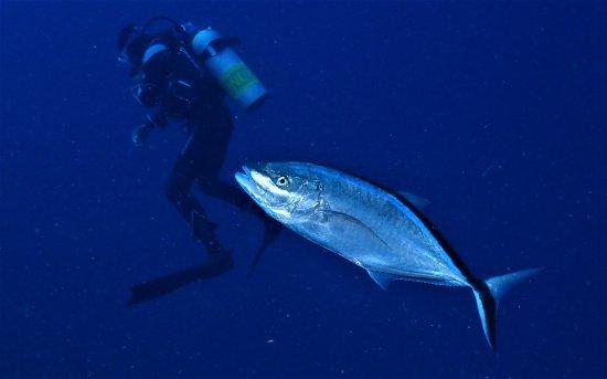 Kralendijk, Bonaire: Dive Instructor Joshua