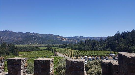 Castello di Amorosa: vineyard